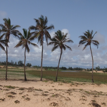 senegal baobab dunas rally dakar