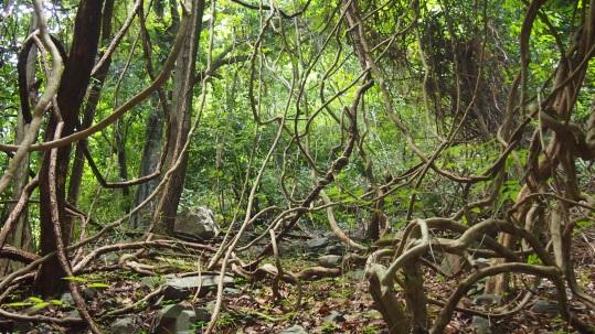 Bosque Lianas País Bassari