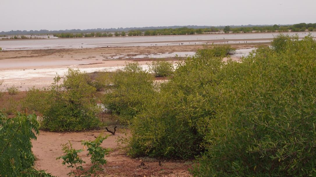 senegal baobab Ziguinchor