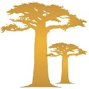 Senegal Baobab
