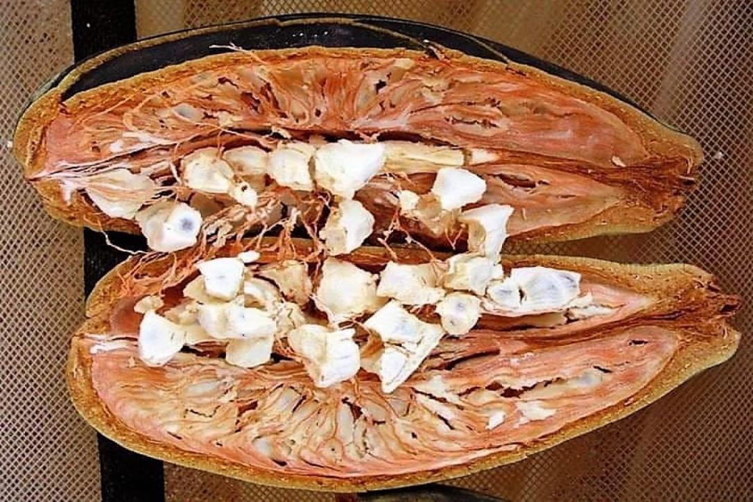 Fruto del Baobab